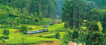ooty image for information